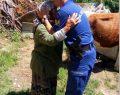 Çalınan Danayı Jandarma Sahibine Teslim Etti, 3 Göz Altı
