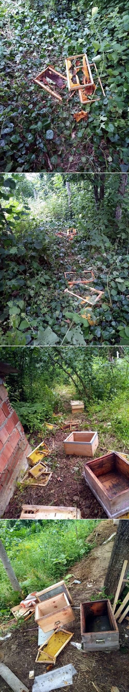 Sinop'ta amatör olarak arıcılıkla uğraşan Fadıl Bahçe isimli vatandaş, Erfelek ilçesine bağlı Sakarabaşı köyünde 10 adet kovan oluşturdu. Bir yıldan bu yana kovanların bakımını yapan Fadıl Bahçe'nin tüm emekleri 1 gecede yok oldu.