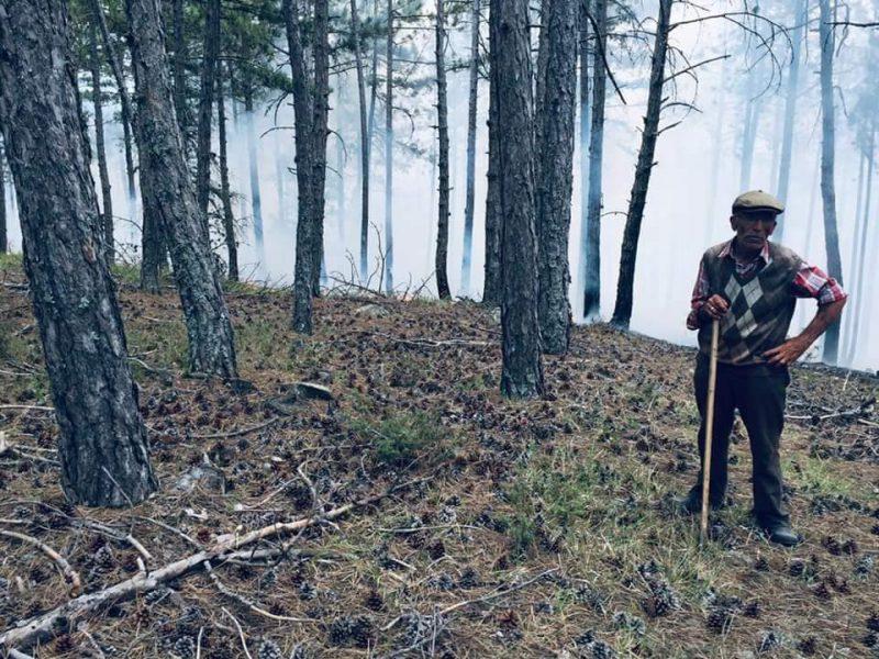 Boyabat'ta Orman Söndürüldü, Soğutma Çalışmaları Başladı…