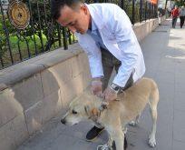Boyabat Belediyesi,Sokak Köpekleri ile Bilgilendirme