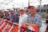 Boyabat Domates Festivali Yapıldı