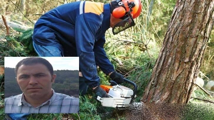 Kestiği Ağacın Altında Kalan İşçi Ağır Yaralandı