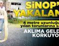 Sinop'ta 4 metre boyundaki dev yılan korkuttu