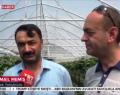 TRT Haberde Boyabat Çileği Tanıtıldı